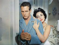 cat on a hot tin roof storyline