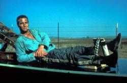 The cool Paul Newman in Cool Hand Luke