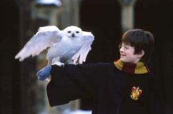 Daniel Radcliffe in Harry Potter and the Sorcerer's Stone.