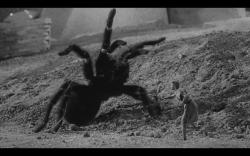 Grant Williams in The Incredible Shrinking Man.