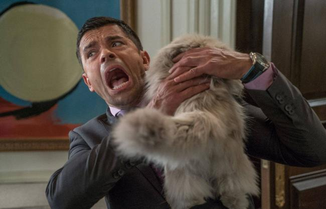Mark Consuelos getting attacked by Mr. Fuzzypants in Nine Lives