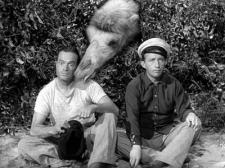 Bob Hope, Bing Crosby and a Camel on the Road to Morocco.