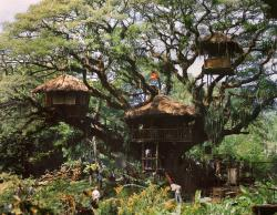 The elaborate treehouse built for Swiss Family Robinson.